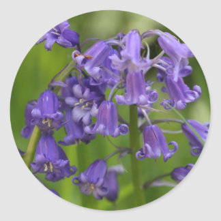 bluebells round sticker
