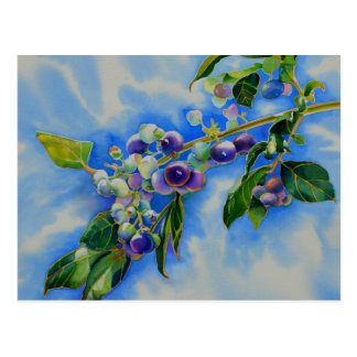 Blueberries Postcard