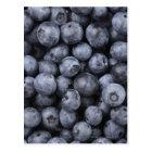 Blueberries Postcard