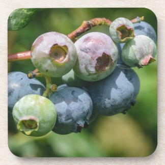 Blueberry Bush Beverage Coaster