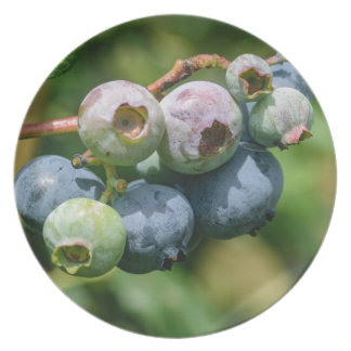 Blueberry Bush Plates