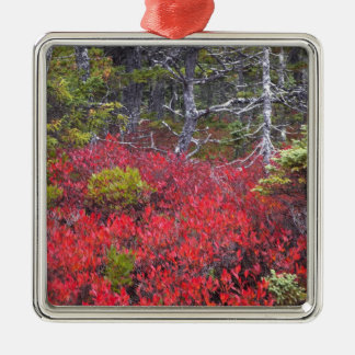 Blueberry bushes and pines Silver-Colored square ornament