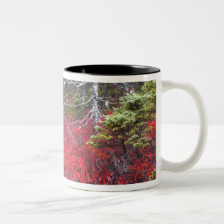 Blueberry bushes and pines Two-Tone coffee mug