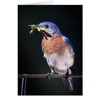bluebird2 card