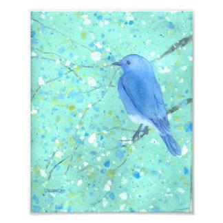 Bluebird Art Print Photographic Print