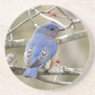 Bluebird Backside Beverage Coasters