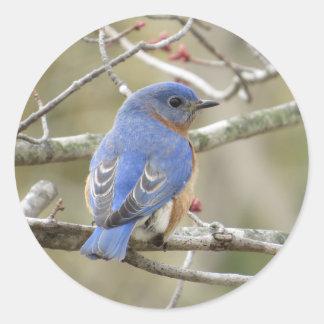 Bluebird Backside Classic Round Sticker