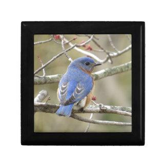Bluebird Backside Gift Box