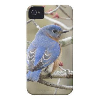 Bluebird Backside iPhone 4 Case-Mate Case
