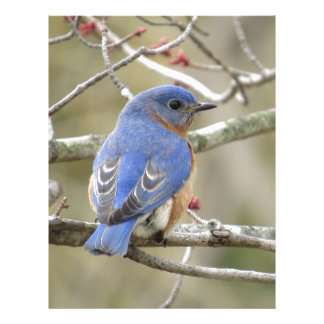 Bluebird Backside Letterhead