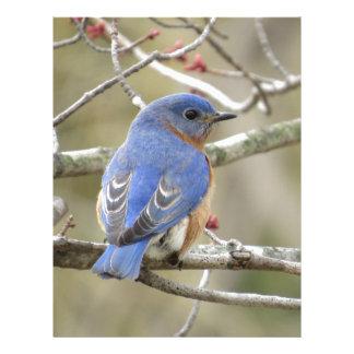Bluebird Backside Personalized Letterhead