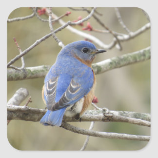 Bluebird Backside Square Sticker