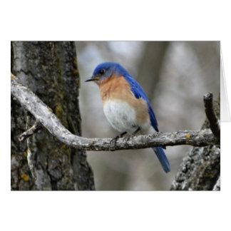 Bluebird, Birthday Card