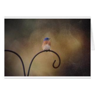 Bluebird Blank Note Card