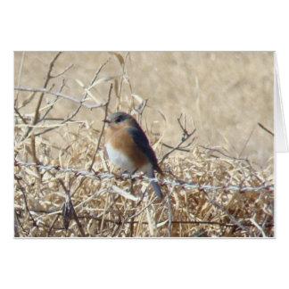 Bluebird & Cardinal, Life Is A Song Sing It! Card