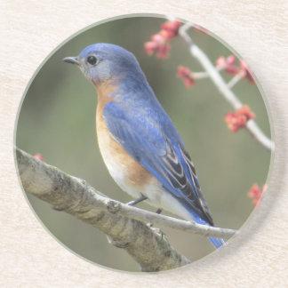 Bluebird Coaster