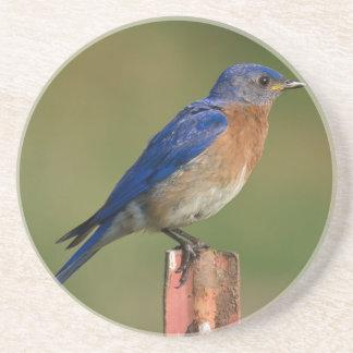 Bluebird Coasters
