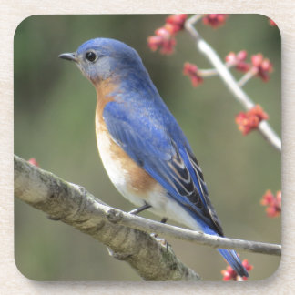 Bluebird Drink Coasters