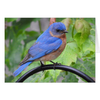 Bluebird Greeting Card, Blank Inside Card