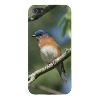 Bluebird iPhone 5/5s Glossy Finish Case. iPhone 5 Cases