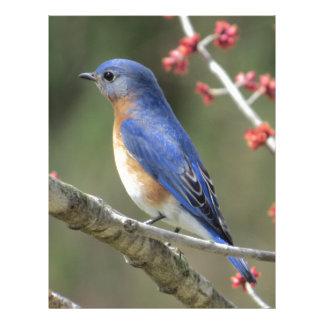 Bluebird Letterhead Design