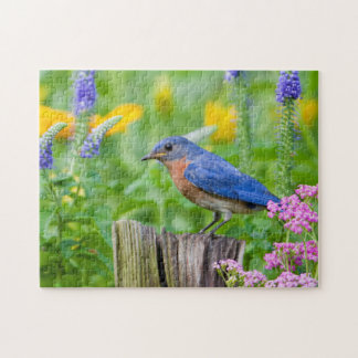 Bluebird male on fence post in flower garden jigsaw puzzle
