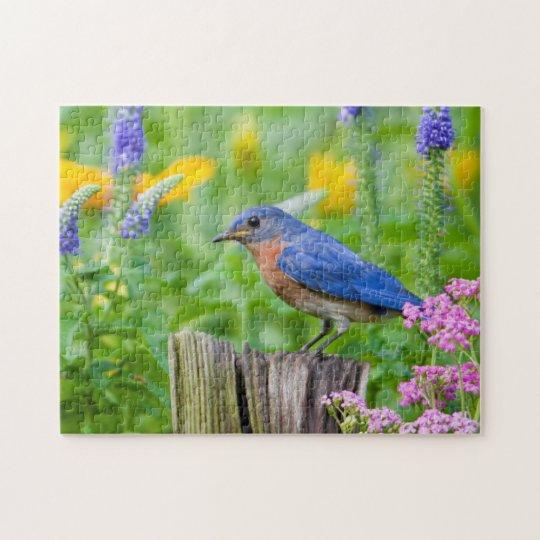Bluebird male on fence post in flower garden jigsaw puzzle