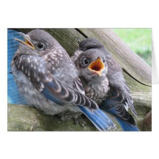 Bluebird Note Card
