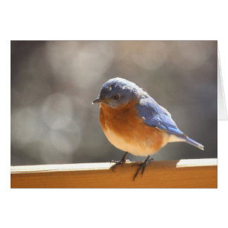 Bluebird Notecard - Blank Inside