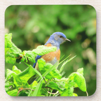 Bluebird on Corkscrew Bush Beverage Coaster