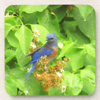 Bluebird on Lilac Hedge Coaster