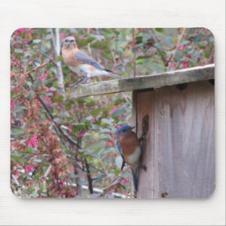 Bluebird Pair Mousepad