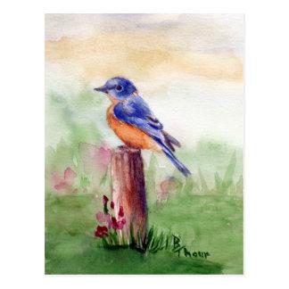 Bluebird Song Postcard