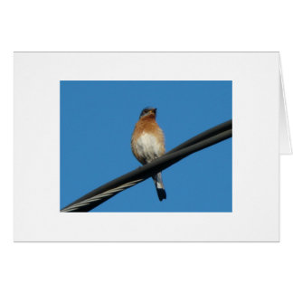 Bluebird, Wishing You A Day of Happiness Card