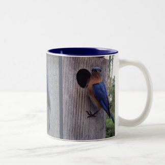 Bluebirds on Box Mug