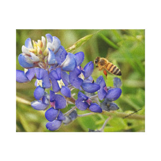 Bluebonnet and Bee photo canvas
