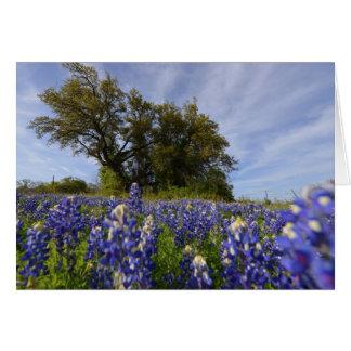 Bluebonnet and Oak Tree Card