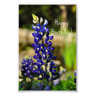 "Bluebonnet ""Happy Birthday"" Photo Print"