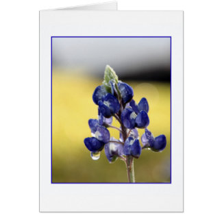 Bluebonnet in Dewdrops Card
