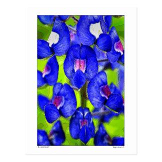 Bluebonnet  - Petals -Details Postcard
