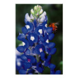bluebonnet with bee print