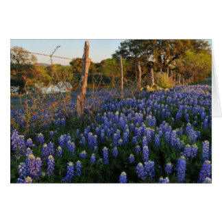 Bluebonnets and Barbed Wire Fence Card