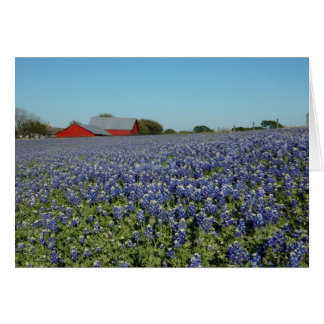 Bluebonnets and Barn Card