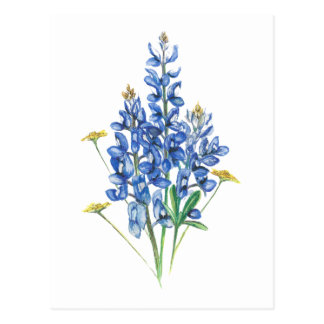 Bluebonnets and Wildflowers Postcard