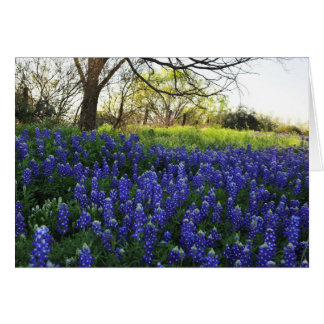 Bluebonnets at Evening Card
