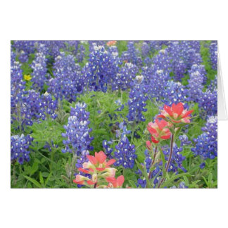 Bluebonnets Card