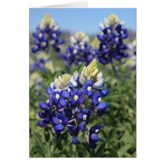 Bluebonnets Card