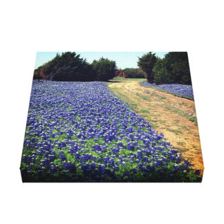 Bluebonnets Dirt Road Print