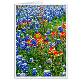 Bluebonnets, Texas Card