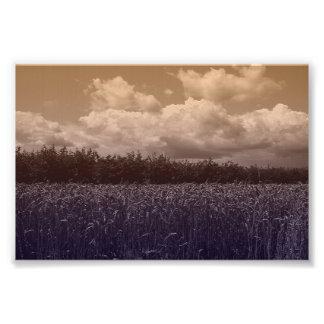 Bluecorn Blues Photograph